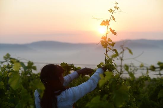 Crama Catleya - vin alb ,vin rosu, vin rose, vinuri romanesti, vinuri selecte.